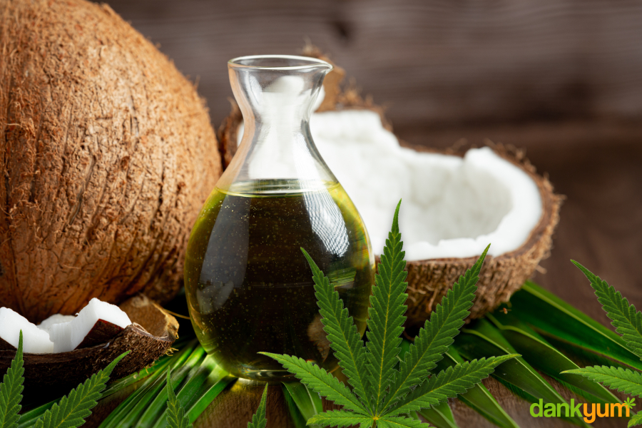 fresh cannabis infused coconut oil